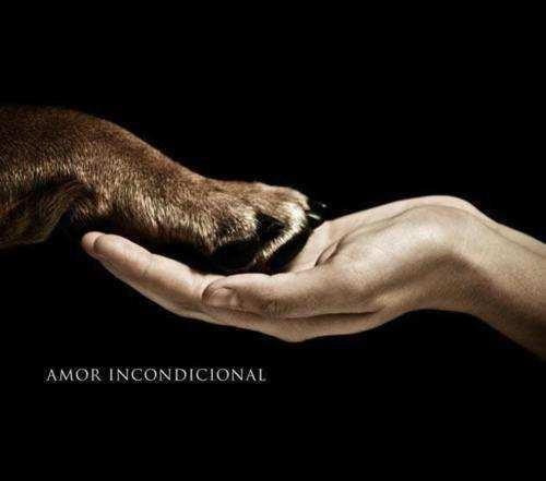 Разыскиваются.... любители общения с животными!