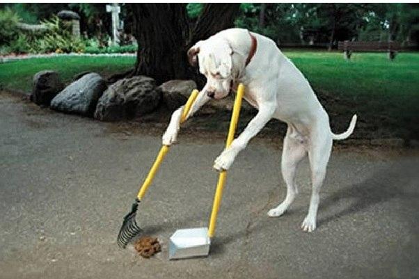 Что делать с собачьими отходами?