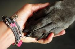 ООЗЖ «Кот и Собака» и БОО ПБЖ «ЗООшанс»: «Спасение одной кошки или собаки не изменит мир, но мир, несомненно, изменится для них!»