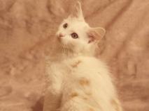 котенок Бельчонок