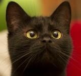 Итоги конкурса «Лучший кот страны» на kp.by: победила кошка Лика