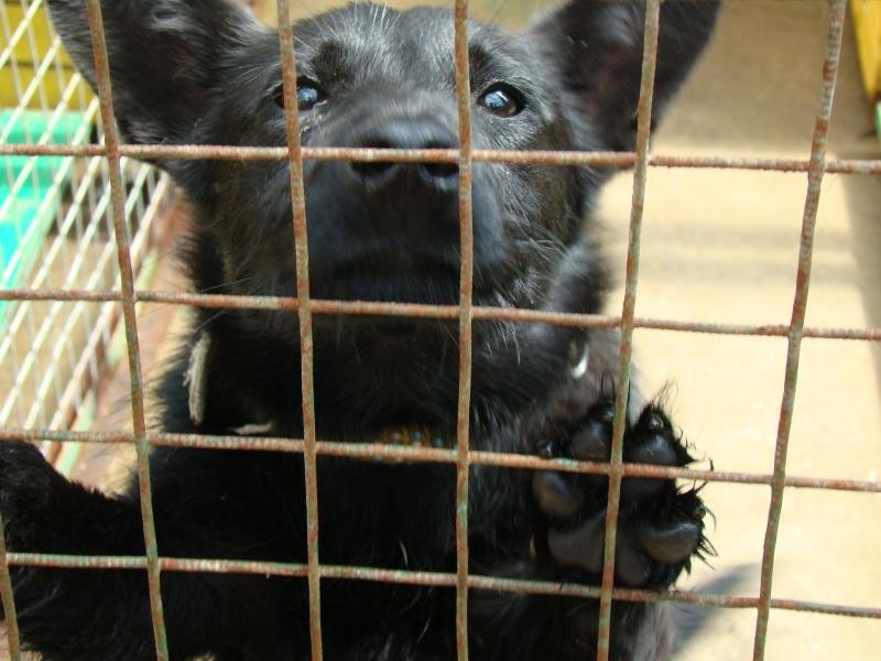 15 августа - Всемирный день бездомных животных (International Homeless Animals Day)