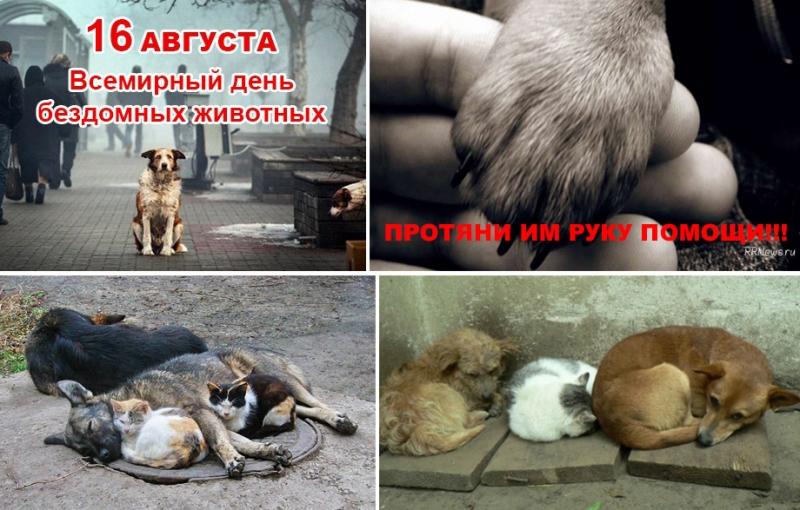 16 августа - Международный день защиты животных!!!