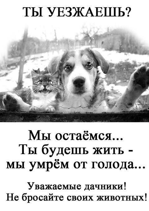 НЕ БРОСАЙТЕ СВОИХ ЖИВОТНЫХ!!!