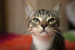 котенок Гектор