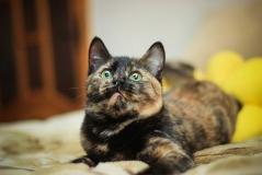 Котенок-подросток Мурзик