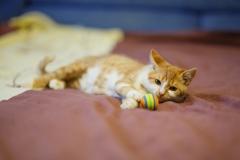 котенок Хома