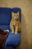 котенок Агния
