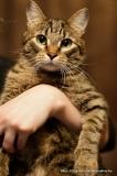 кошка Ася
