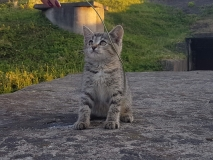 Китти
