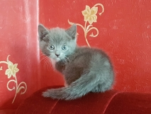 Котенок-мальчик 1