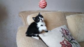 Котенок мальчик 2