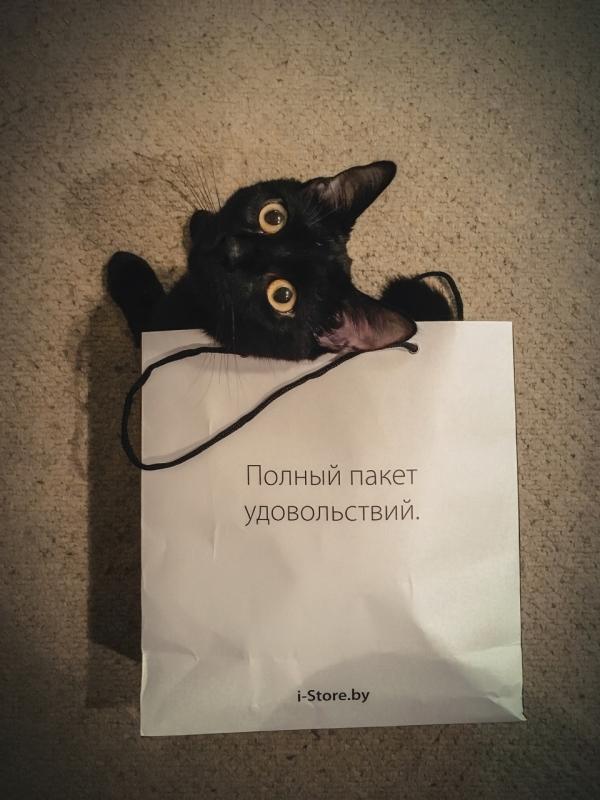 1 марта- день кошек