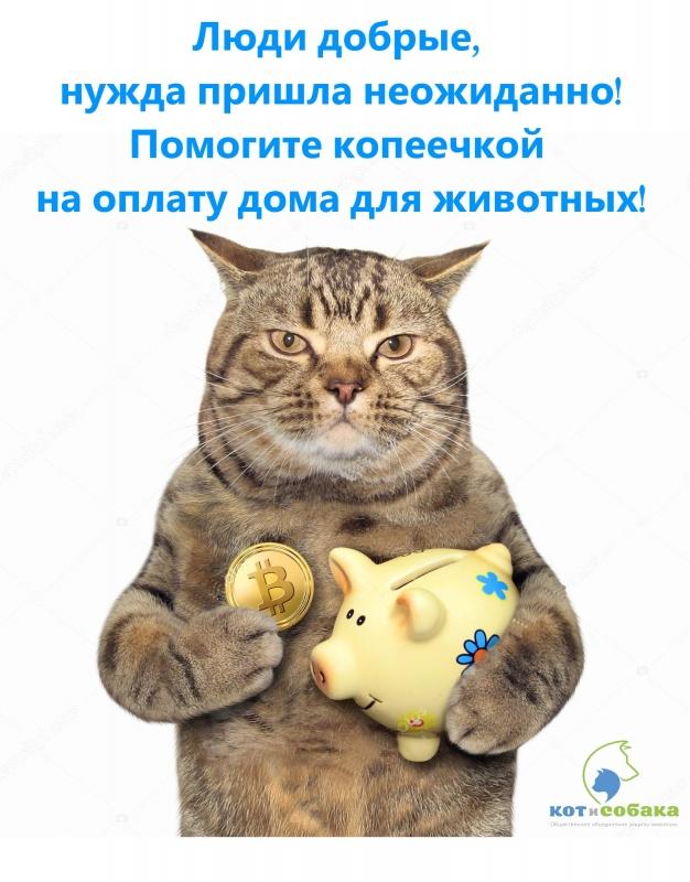 Просим помощи в оплате аренды дома для животных!