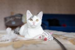 котенок Горошка