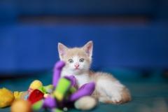 котенок Пломбир