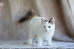 котенок Гермиона